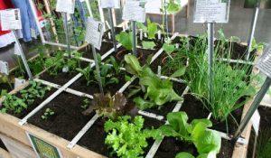 (detailHero)_Puyallup_Home-Gardening-Show_ActivityImage
